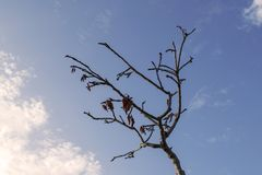 裸体干燥树 库存图片