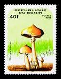 褐孢子伞菌cubensis,蘑菇serie,大约1996年 免版税库存照片