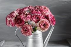 褐红和白色波斯毛茛花 在金属灰色葡萄酒喷壶,拷贝空间的卷曲牡丹毛茛属 免版税库存图片