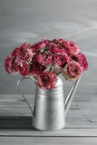 褐红和白色波斯毛茛花 在金属灰色葡萄酒喷壶,拷贝空间的卷曲牡丹毛茛属 免版税库存照片