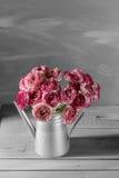 褐红和白色波斯毛茛花 在金属灰色葡萄酒喷壶,拷贝空间的卷曲牡丹毛茛属 免版税图库摄影