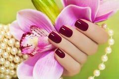 褐红的修指甲。 库存图片