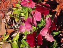褐红的花摘要  免版税库存照片