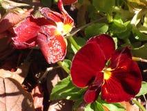 褐红的花 免版税库存图片