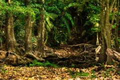 褐色叶子在森林里 免版税库存图片