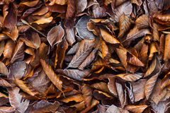 褐色叶子 图库摄影