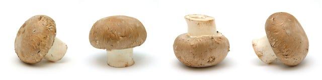 褐色四蘑菇 免版税库存图片