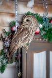 黄褐色或布朗猫头鹰在窗口 圣诞节 免版税库存图片
