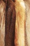 褐色涂上毛皮 免版税库存图片