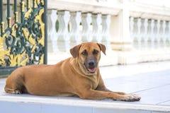 褐色混杂的品种狗  免版税库存图片