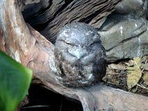 黄褐色的Frogmouth 澳大利亚鸟 免版税库存图片