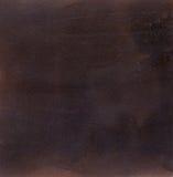 黑褐色羚羊 免版税库存照片