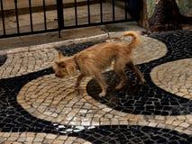 褴褛的狗在卡斯卡伊斯在里斯本葡萄牙附近的爱都酒店 免版税库存照片
