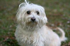 褴褛的狗 免版税库存图片