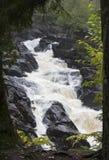 褴褛秋天在阿尔根金族公园,加拿大 库存图片