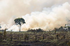 巴西人阿马佐尼亚燃烧