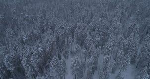 西伯利亚冬天森林在俄罗斯,taiga 2 股票视频