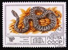 西伯利亚坑蛇蝎或者Halys蛇蝎,毒蛇系列,大约1977年 库存图片