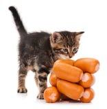 西伯利亚小猫 免版税库存照片