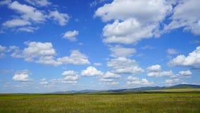 西伯利亚干草原在夏天 库存照片