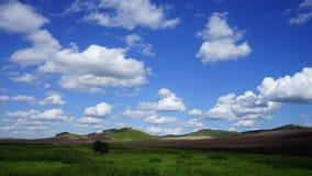 西伯利亚干草原在夏天 免版税库存图片