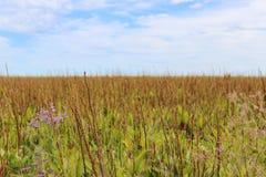 西伯利亚干草原 免版税库存图片