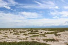 西伯利亚干草原 库存照片