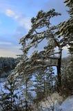 西伯利亚杉木是在山边缘 横向俄国村庄冬天 库存图片