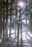 西伯利亚森林 免版税库存图片