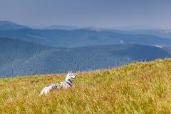西伯利亚爱斯基摩人在草地山背景中 库存图片