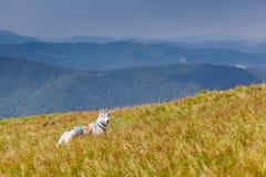西伯利亚爱斯基摩人在草地山背景中 免版税库存图片