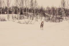 西伯利亚爱斯基摩人在被设色的冬天森林里 免版税图库摄影