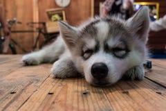 西伯利亚爱斯基摩人睡觉 免版税库存照片