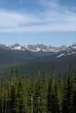 西伯利亚的山的森林 库存图片