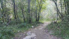 西伯利亚的森林公园 图库摄影
