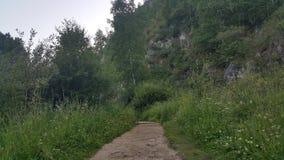 西伯利亚的森林公园 库存照片
