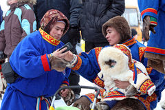 西伯利亚的驯鹿交配动物者 免版税库存图片