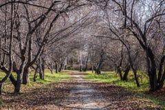 西伯利亚美丽的秋天森林 图库摄影