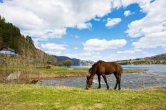 西伯利亚风景 库存照片