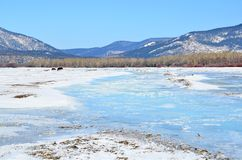 西伯利亚,伊尔库次克地区 Goloustnaya河在冬天晴天 免版税库存照片