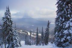 西伯利亚 森林 库存图片