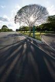 巴西利亚的树 库存图片
