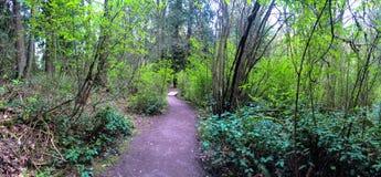 西北供徒步旅行的小道通过森林,宽全景 图库摄影