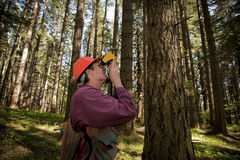 西北部林务员太平洋 库存照片