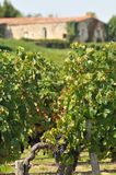 西南区法国葡萄园  库存照片
