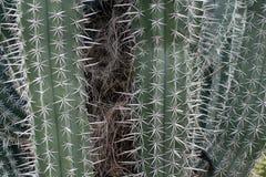西南美国的生存沙漠 免版税库存照片