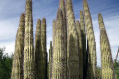 西南美国的生存沙漠 免版税库存图片