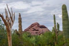 西南美国的生存沙漠 库存图片