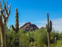 西南美国的生存沙漠 免版税图库摄影