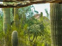 西南美国的生存沙漠 库存照片